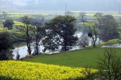 Bloemkolen dichtbij rivier in de lente Royalty-vrije Stock Afbeelding