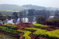 Bloemkolen dichtbij rivier in de lente Stock Foto's