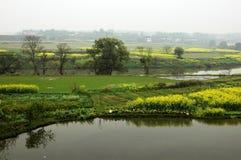 Bloemkolen dichtbij rivier in de lente Royalty-vrije Stock Fotografie