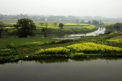 Bloemkolen dichtbij rivier in de lente Royalty-vrije Stock Foto's