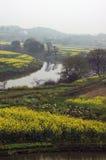 Bloemkolen dichtbij rivier in de lente Stock Afbeelding