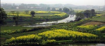 Bloemkolen dichtbij rivier in de lente Stock Afbeeldingen