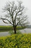 Bloemkolen nearand boot in rivier in de lente Royalty-vrije Stock Foto