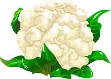 Bloemkool vector illustratie