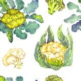 Bloemkool en broccoliinstallatie met bladeren royalty-vrije illustratie
