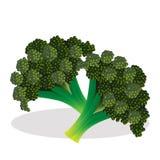 Bloemkool vectorillustratie Royalty-vrije Stock Afbeelding