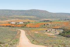 Bloemlandschap dichtbij Garies Stock Fotografie