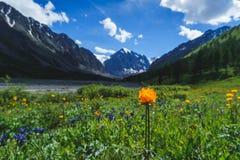 Bloemlandschap met bergen Stock Foto
