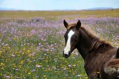 Bloemlandschap met een paard Royalty-vrije Stock Foto's