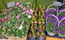 Bloemmarkt met roze, witte en purpere bloemen stock foto