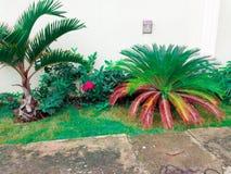 Bloempatroon van huisfront Royalty-vrije Stock Fotografie