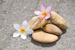 Bloemplumeria of frangipani met steen op vloer Stock Afbeelding