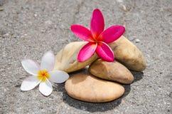 Bloemplumeria of frangipani met steen op vloer Stock Afbeeldingen