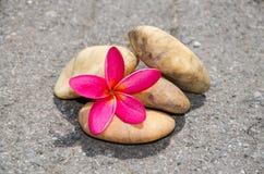Bloemplumeria of frangipani met steen op vloer Stock Foto's