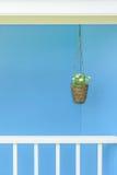 Bloempot het hangen met blauwe muur royalty-vrije stock foto's