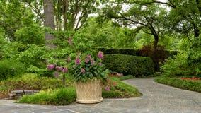 Bloempot met purpere digitalissen en bedden met rode Geraniums Dallas Arboretum en Botanische Tuin royalty-vrije stock fotografie