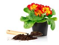 Bloempot met rode bloemen en grond in schop Stock Afbeeldingen