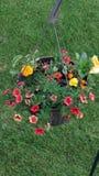 bloempot op de achtergrond Royalty-vrije Stock Foto's