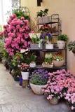 bloempot op de achtergrond Royalty-vrije Stock Foto