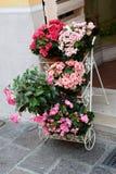 bloempot op de achtergrond Royalty-vrije Stock Fotografie