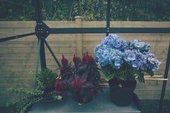 Bloempotten in een serre royalty-vrije stock foto's