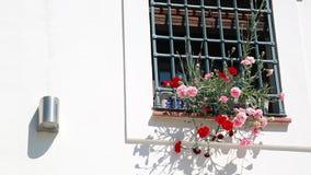 Bloempotten en kleurrijke bloemen op een witte muur in Granada stock footage
