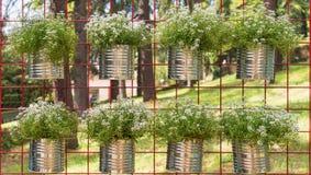 Bloempotten het hangen Stock Fotografie