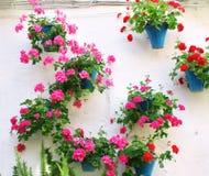 Bloempotten met geranium Stock Foto's