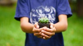 Bloempotten op de kind` s handen Stock Afbeeldingen