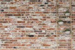 Bloempotten op een ladder royalty-vrije stock foto