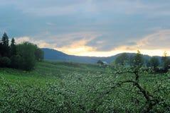 Bloemrijk landschap stock fotografie
