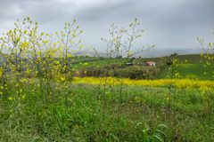 Bloemrijk Platteland royalty-vrije stock afbeelding