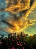 Bloemrijke gouden zonsondergang Stock Fotografie