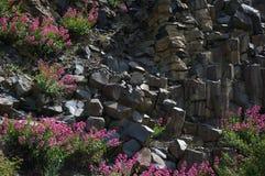 Bloemrijke rotsmuur royalty-vrije stock foto