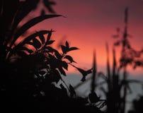Bloemrijke roze zonsondergang Royalty-vrije Stock Fotografie