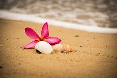 bloemshell strand royalty-vrije stock fotografie