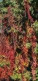 bloemspel Stock Foto's