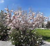 Bloemstruiken en blauwe hemel in de lente royalty-vrije stock afbeelding