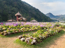 Bloemtuin in de berg van doiangkhang, Chaingmai, Thailand Royalty-vrije Stock Foto's