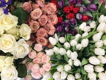 Bloemtuin met rozerode koffie witte en purpere bloemen Stock Fotografie