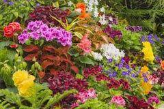 Bloemtuin in Victoria British Columbia Canada Royalty-vrije Stock Afbeeldingen