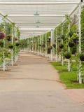 Bloemtunnel in de tuin van Thailand, hangende bloemen bij de Koning Roy Stock Fotografie