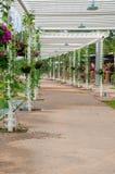 Bloemtunnel in de tuin van Thailand, hangende bloemen bij de Koning Roy Royalty-vrije Stock Afbeelding