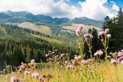 Bloemweide in bergen royalty-vrije stock foto