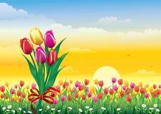 Bloemweide met tulpen en madeliefjes stock illustratie