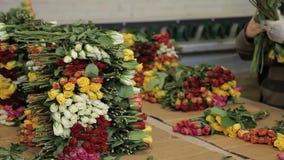 In bloemwinkel op de pakken van de tribunewerknemer een stapel gekleurde rozen stock video