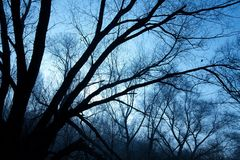 Bloßer Wald Stockbilder