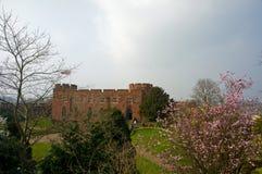 Bloesem en kasteel Royalty-vrije Stock Afbeeldingen