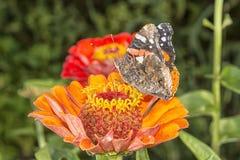 Bloesem met vlinder royalty-vrije stock foto