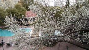 Bloesem van boom Stock Afbeelding